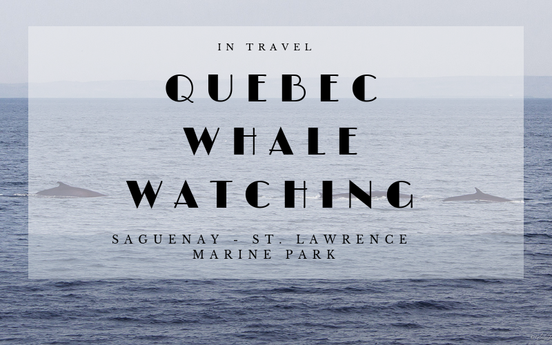 Quebec Whale Watching: Things To Do in Quebec, Canada