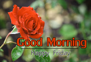 New Good Morning 4k Full HD Images Download For Daily%2B12