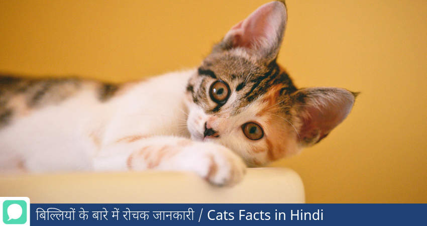 Fascinating Facts About Cats in Hindi