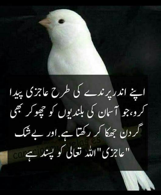 Best Inspiring Quotes in Urdu images - apne ander parinday ki tarah ajazi peada kero