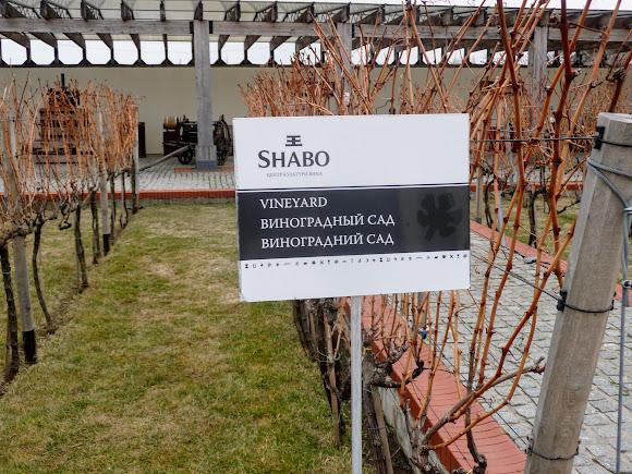 Шабо. Центр культуры вина. Виноградный сад