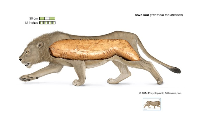 Ancient Cave Lion Figurine Fragment Discovered In Denisova Cave
