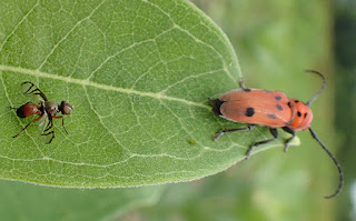 आल इंसेक्ट्स नाम लिस्ट ▷ Insects Name