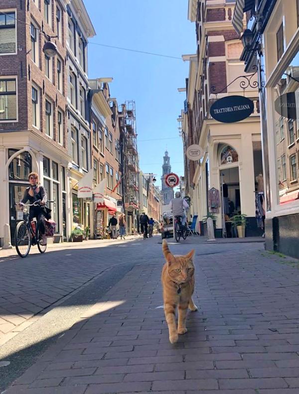 reguliersdwarsstraat amsterdam