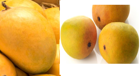 Mango meaning in tamil, telugu, marathi, kannada, malayalam, in hindi name, gujarati, in marathi, indian name, tamil, english, other names called as, translation