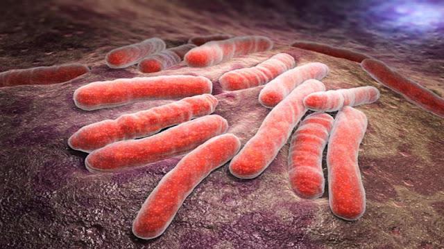 البكتيريا المسببة للدرن السل