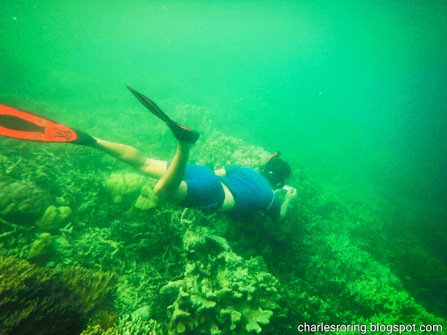 swimming and freediving in Raja Amapat