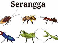 Mengenal Peran Serangga dalam Ekosistem
