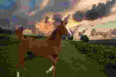 الفرق بين الحصان و الفرس