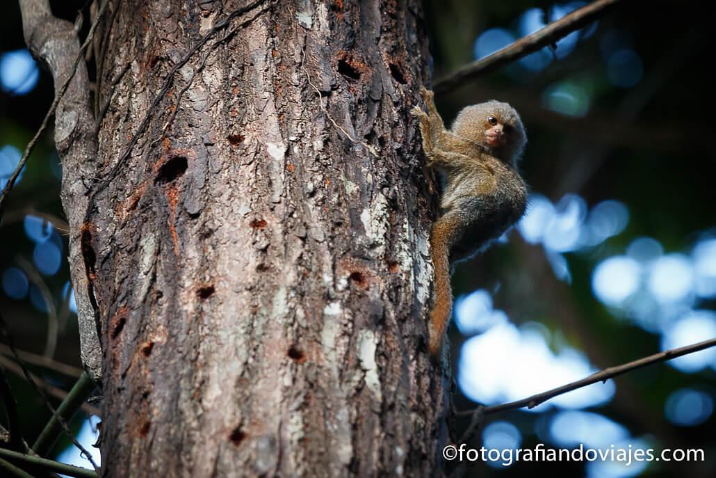 fauna del amazonas peruano