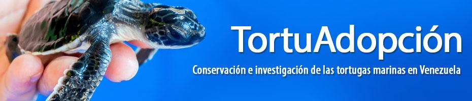 Conservación e investigación de las tortugas marinas en Venezuela