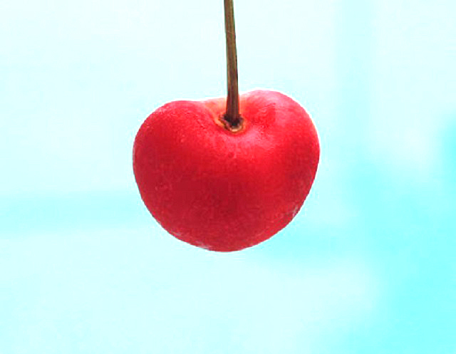 this is a single red rainier cherry with a stem
