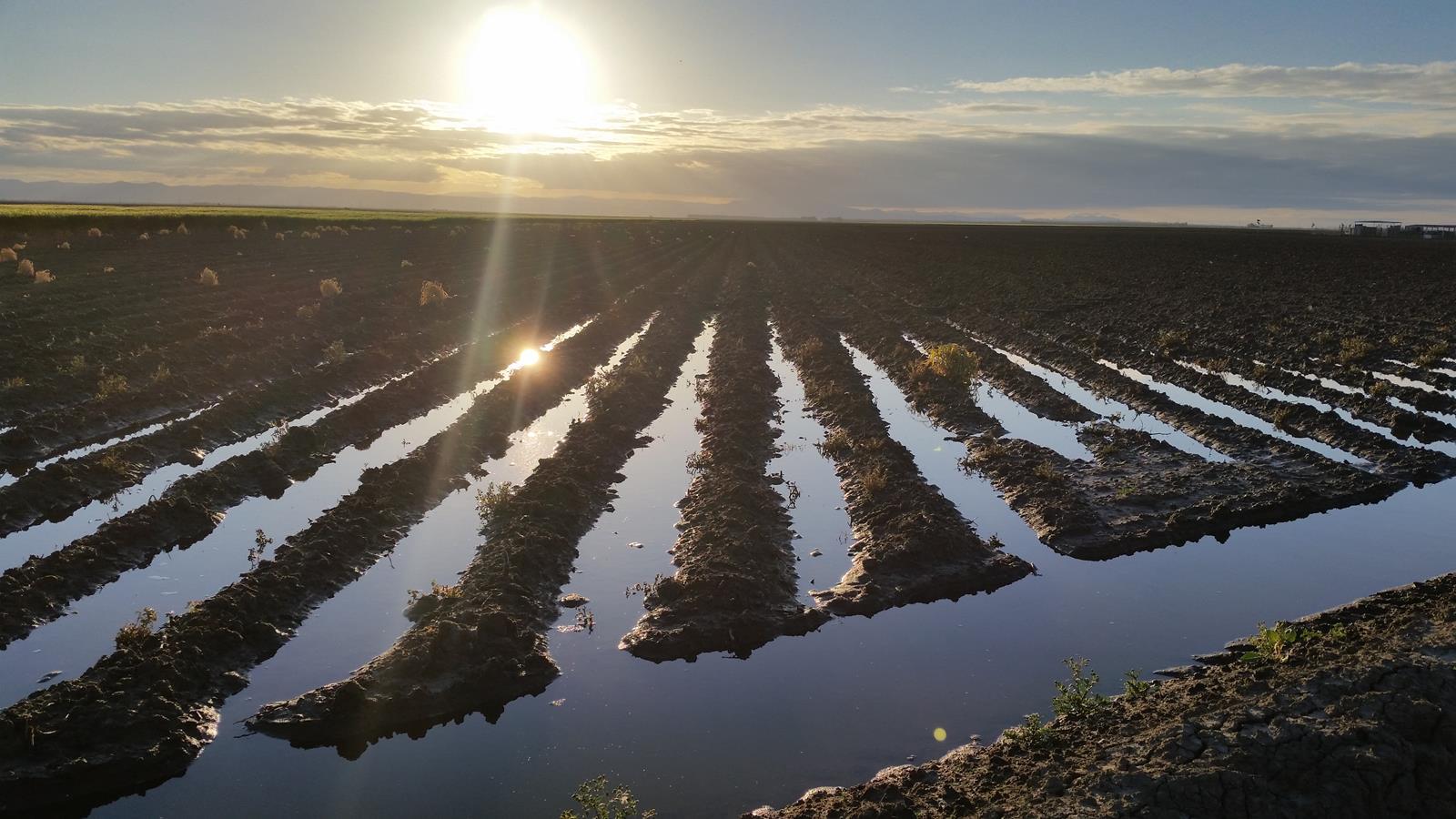 irrigated alfalfa ucalfalfagrowth free