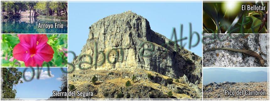EN LA SIERRA DEL SEGURA. Arroyo Frío, El Bellotar y la Piedra del Cambrón