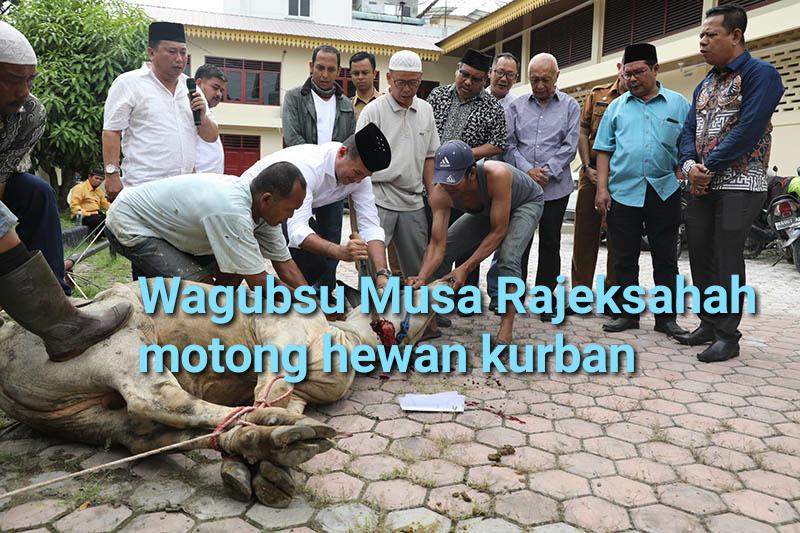 Wagubsu Musa Rajekshah saat menyembelih lembuh untuk kurban.