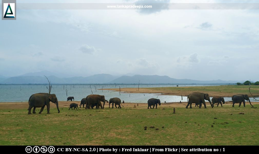 Elephants passing Udawalawe reservoir