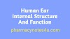 The Human Ear Diagram, Structure and Its Function