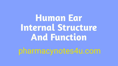 The human ear diagram, internal structure of ear, human ear structure and function, human ear diagram