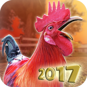 Balap Ayam Jago Mod APK (Unlimited Money) - wasildragon.web.id