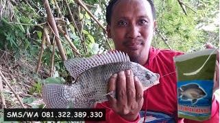Umpan Ikan Nila Khusus Di Kolam