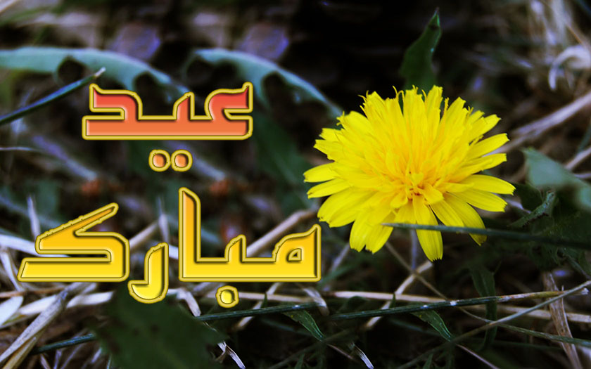 Sweetcouple yellow flower eid ul adha 2012 flower card wallpapers free eid ul zuha adha mubarak 2012 card flower wallpapers urdu text 002 mightylinksfo