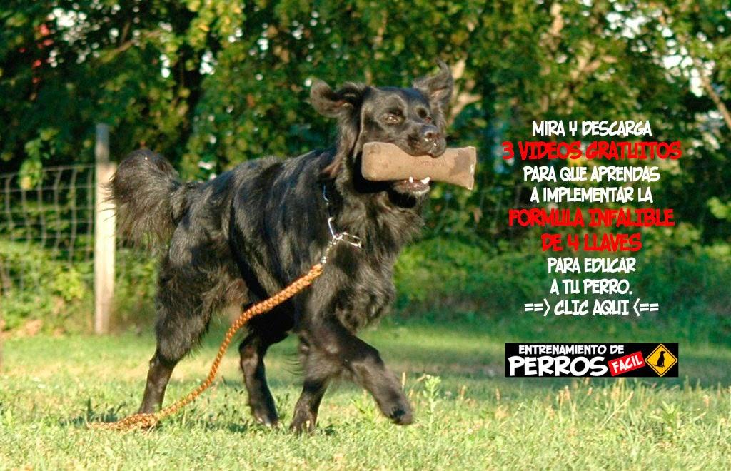 ENTRENAMIENTO DE PERROS ONLINE, IDEA DE NEGOCIO