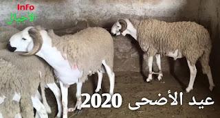 ترقيم 7 مليون رأس من الأغنام و الماعز و الأبقار