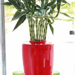 Send Indoor House Plant to Egypt