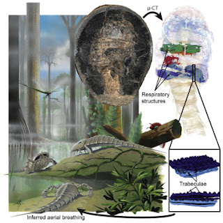 depiction of prehistoric arthropods in situ with enlarged drawings of breathing structures