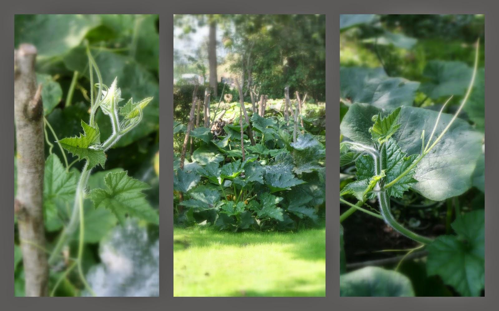 Greftenhus oan e ie: midsummer / herfst
