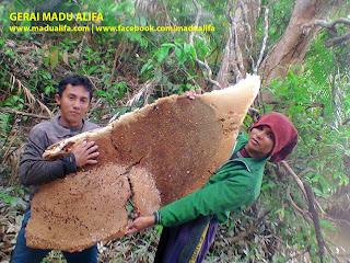 madu asli hutan di tangerang panen madu asli tangerang