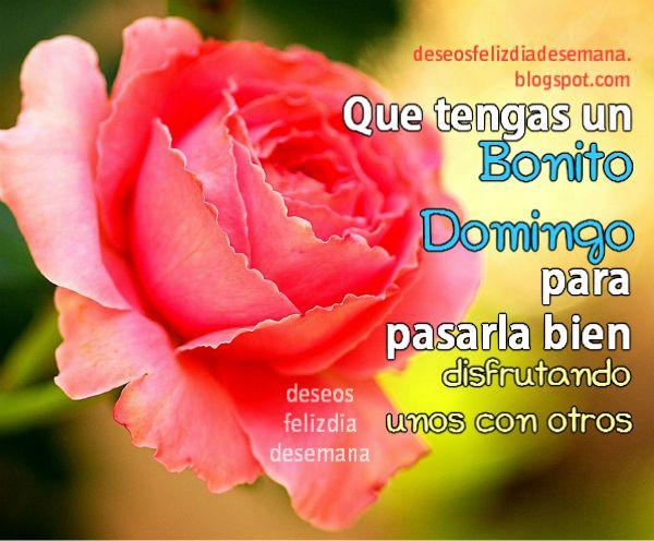 imagen de feliz domingo con roza frases bendiciones para amigos y familia