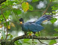 bigodi wetland birding, birding tours in kibale national park