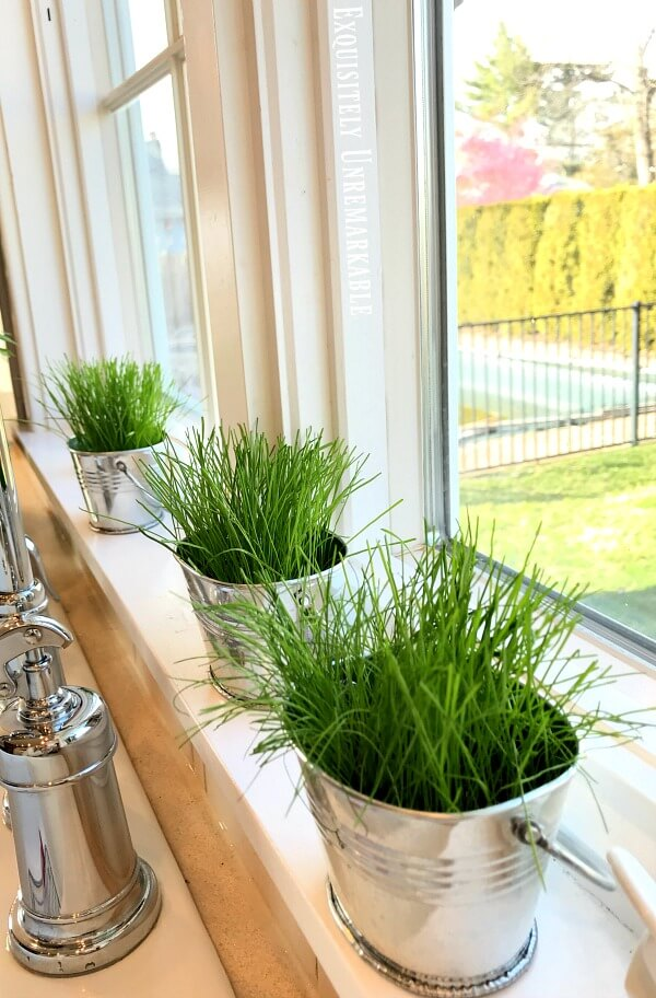 Grass growing on windowsill in small silver buckets