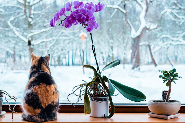 The most popular posts of 2020 on Companion Animal Psychology. A calico cat looks out the window at a snowy scene.