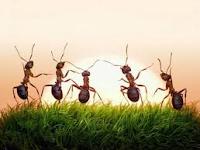 Apa itu arthropoda dan bagaimana cara pengelompokkannya?