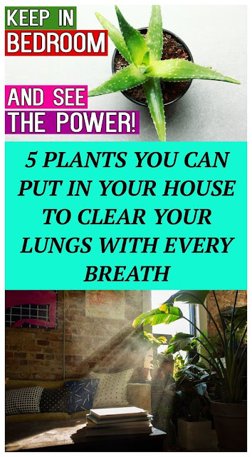 5 Plants You Can Put In Your House To Clear Your Lungs With Every Breath