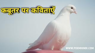 कबूतर पर कविता। Pigeon Poem In Hindi