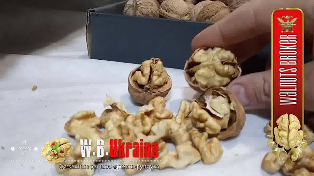 Характеристики грецкого ореха Кочерженко и Иван Багряный от Walnuts Broker
