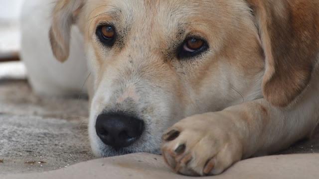 Πρωτοβουλία Βορίδη για να μετατραπεί το αδίκημα βασανισμού των ζώων σε κακούργημα