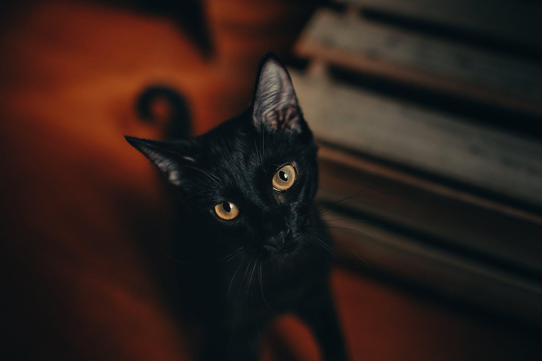 13 faits curieux sur les chats