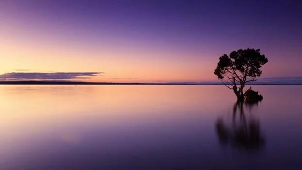 湖に突き出る一本の木