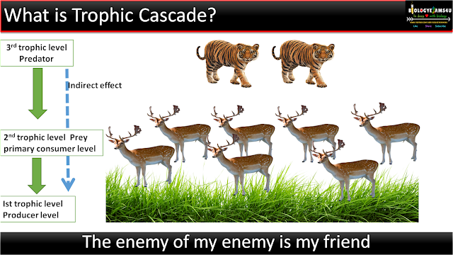 Definition of trophic cascade