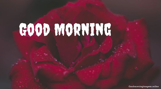 Good Morning Images In Roses 13