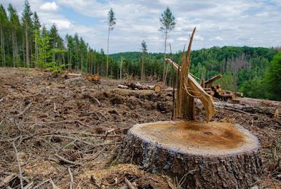 Hubungan Populasi Manusia Dengan Kerusakan Lingkungan