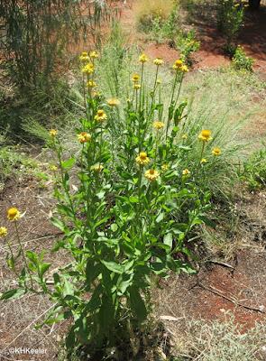 Alice Springs Desert Park