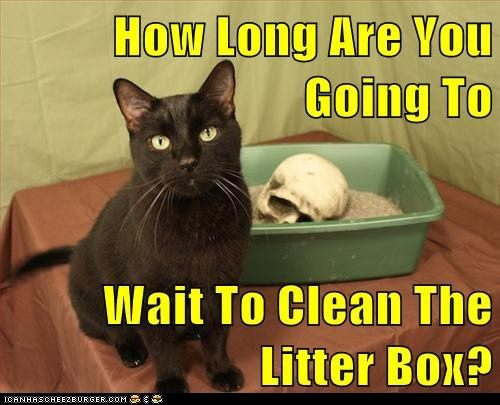12 Jokes About Cat Litter For You N Your Cat