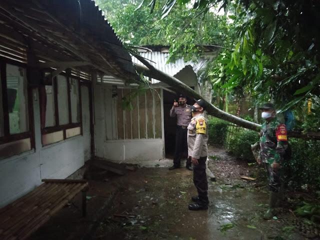 Akibat Hujan Dan Angin Satu Rumah Tertimpa Pohon Albasia