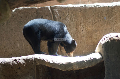 Ark Avilon Zoo - Sun Bear