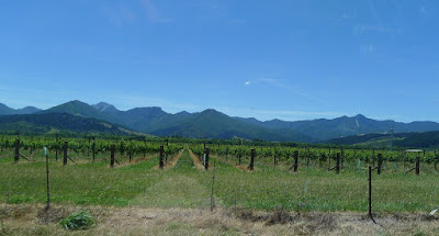 Vineyards of Marlborough
